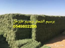 برسيم برسيم للبيع 0549802206 توفير